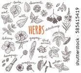 herbs and wild flowers set.... | Shutterstock .eps vector #585615419
