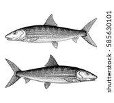 Bonefish Illustration
