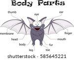 bat body parts. animal anatomy...   Shutterstock .eps vector #585645221