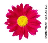 Red Flower Head Isolated On...
