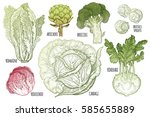 color vegetables set. isolated... | Shutterstock .eps vector #585655889