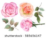 watercolor set of roses and... | Shutterstock . vector #585656147