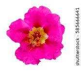 beautiful flower. purple flower ... | Shutterstock . vector #585666641