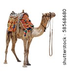 the lonely domestic camel on... | Shutterstock . vector #58568680