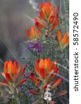 Indian Paintbrush and other New Mexico summer wildflowers