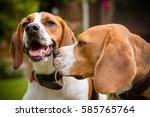 beagle having fun | Shutterstock . vector #585765764