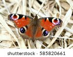 european common peacock... | Shutterstock . vector #585820661