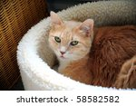 Stock photo kitten relaxing in his warm fuzzy bed 58582582