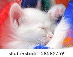 Stock photo cute white kitten sleeping 58582759