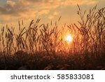 sunset and grass flower beside... | Shutterstock . vector #585833081