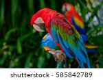 the colorful parrot sleeping on ... | Shutterstock . vector #585842789
