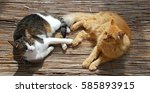 Two Cats Lying Playfully On Th...