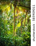palm leaves.tropical forest on... | Shutterstock . vector #585909011