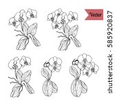 set of black and white orchid...   Shutterstock .eps vector #585920837