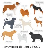 working  watching  dog breeds... | Shutterstock .eps vector #585943379