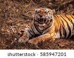 close up of an impressive... | Shutterstock . vector #585947201