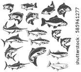 Fish Illustrations On White...