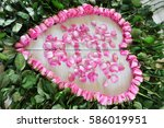 beautiful pink roses and the... | Shutterstock . vector #586019951