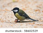 Great Tit With Nut 1