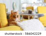 cute red cat on sofa in modern... | Shutterstock . vector #586042229