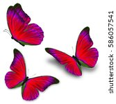 beautiful three blue butterfly...   Shutterstock . vector #586057541