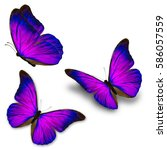 beautiful three blue butterfly... | Shutterstock . vector #586057559
