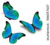 Stock photo beautiful three blue butterfly flying isolated on white background 586057637