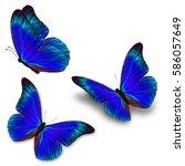 beautiful three blue butterfly...   Shutterstock . vector #586057649