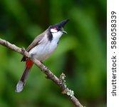 beautiful blue bird  red...   Shutterstock . vector #586058339