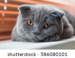 very serious and pensive cat at ... | Shutterstock . vector #586080101