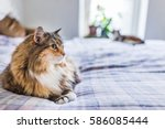 Stock photo two cats lying on bed waiting for owner 586085444
