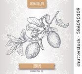 citrus limon aka lemon branch... | Shutterstock .eps vector #586090109