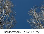 trees | Shutterstock . vector #586117199