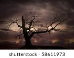 Silhouette of bare tree against moody sky at sunset - stock photo