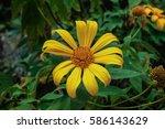 Beautiful Bright Yellow Daisy...
