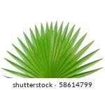 The Palm Leaf Background
