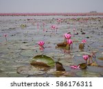 amazing  lotus sea thailand. | Shutterstock . vector #586176311