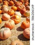 Autumn Picked Pumpkins In Pale...