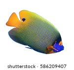 Fish Isolated White Background...
