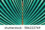 striped of palm leaf  abstract... | Shutterstock . vector #586222769