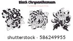 Vector Black Chrysanthemum...
