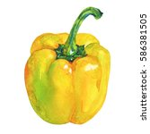 watercolor yellow pepper... | Shutterstock . vector #586381505