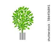 benjamin's ficus. deciduous... | Shutterstock .eps vector #586456841