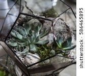 various succulents in the...   Shutterstock . vector #586465895