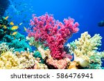 underwater world landscape.... | Shutterstock . vector #586476941