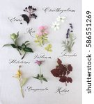decorative botanical pattern on ... | Shutterstock . vector #586551269