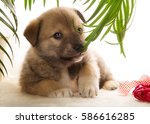 Brown Puppy Chewing On A Plant