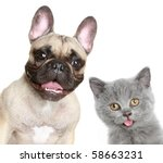 Stock photo french bulldog and grey kitten on a white background 58663231