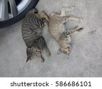 cat | Shutterstock . vector #586686101