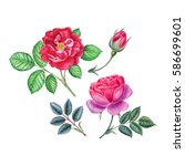 watercolor hand painted roses.... | Shutterstock . vector #586699601